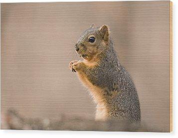 A Fox Squirrel Sciurus Niger Finds Wood Print by Joel Sartore