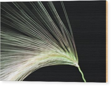 A Foxtail Seed In Flight - Macro Wood Print by Sandra Foster