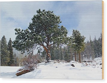 Wood Print featuring the photograph A Fresh Blanket Of Snow by Shane Bechler