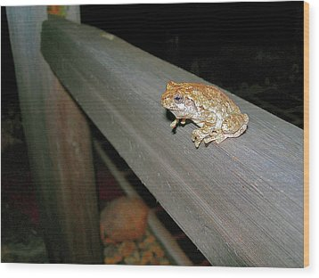 Wood Print featuring the photograph A Frog Went A Courting by Randy Rosenberger