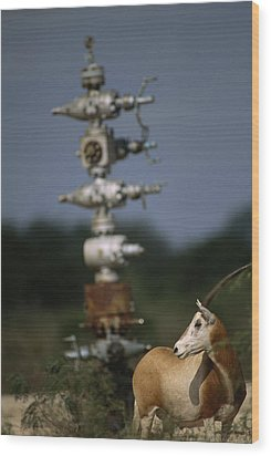 A Gemsbok Standing Near A Natural Gas Wood Print by Joel Sartore