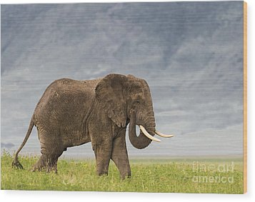 Wood Print featuring the photograph A Gentle Giant by Sandra Bronstein