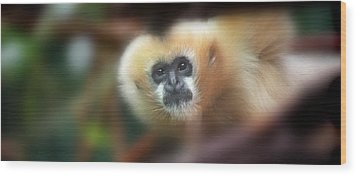 A Gibbon's Stare Wood Print by Greg Slocum