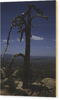 A Gnarled Tree In Arizona Wood Print by Stacy Gold
