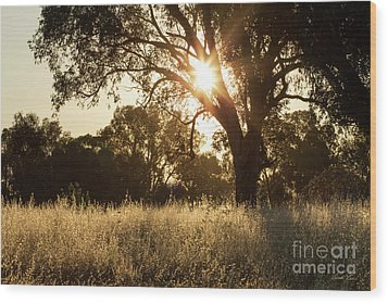 Wood Print featuring the photograph A Golden Afternoon by Linda Lees