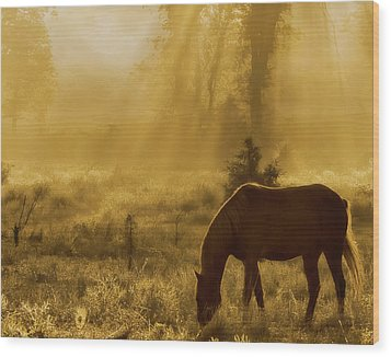A Golden Moment Wood Print by Ron  McGinnis