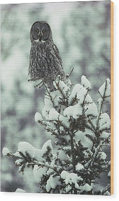 A Great Gray Owl Strix Nebulosa Perches Wood Print by Tom Murphy