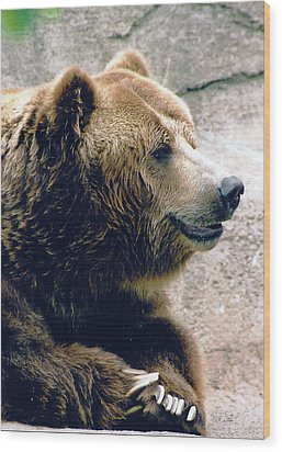 A Grizzly Grin Wood Print