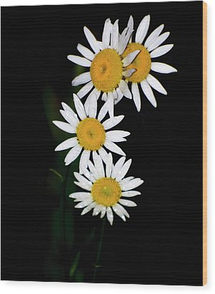 Wood Print featuring the digital art A Group Of Wild Daisies by Chris Flees