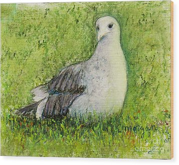 A Gull On The Grass Wood Print by Laurie Morgan