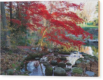 A Japanese Maple With Colorful, Red Wood Print by Darlyne A. Murawski