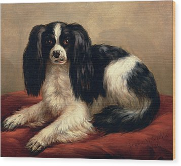A King Charles Spaniel Seated On A Red Cushion Wood Print by Eugene Joseph Verboeckhoven