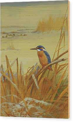 A Kingfisher Amongst Reeds In Winter Wood Print by Archibald Thorburn
