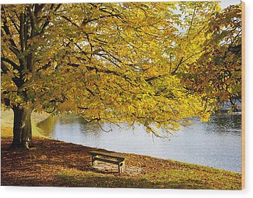 A Large Tree And Bench Along The Water Wood Print by John Short