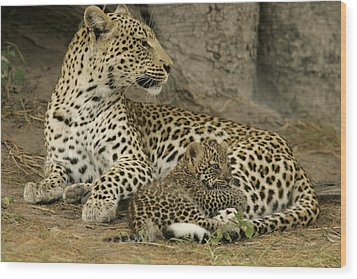 A Leopard Cub With Her Mother Wood Print by Beverly Joubert