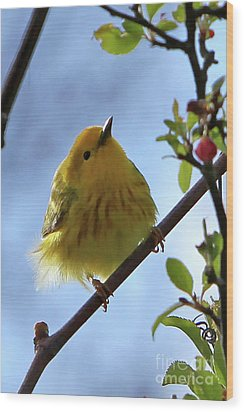 A Liitle Yellow Puff Ball Wood Print by Marle Nopardi