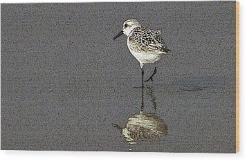 A Little Bird On A Beach Wood Print