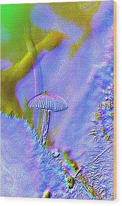 A Little Mushroom  Wood Print by Jeff Swan