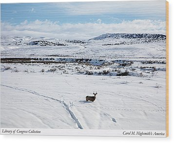 A Lone Buck Deer In Carbon County, Wyoming Wood Print by Carol M Highsmith