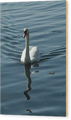 A Lone Swan Swims Through The Water Wood Print by Todd Gipstein