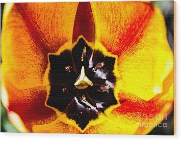 A Look Inside A Tulip  Wood Print