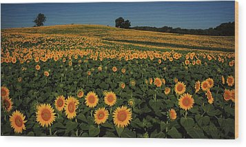 Wood Print featuring the photograph A Lot Of Birdseed  by Chris Berry