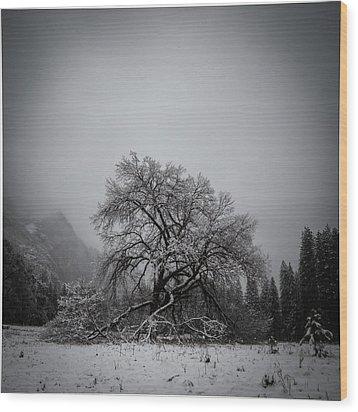 A Magic Tree Wood Print