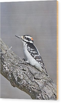 Wood Print featuring the photograph A Male Downey Woodpecker 1120 by Michael Peychich