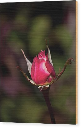 Wood Print featuring the photograph A New Beginning by John Knapko