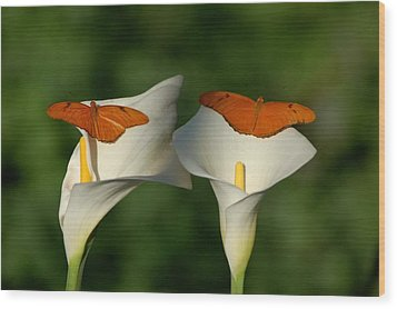 A Pair Of Butterflies Land Upon A Pair Of Lilies Wood Print by Susan Heller