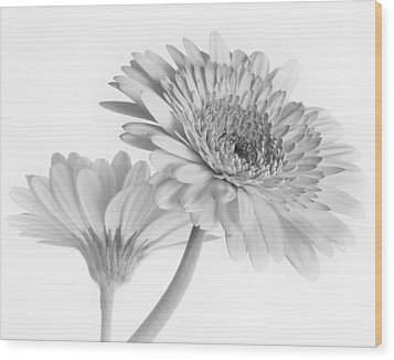 A Pair Of Daisies Wood Print by David and Carol Kelly