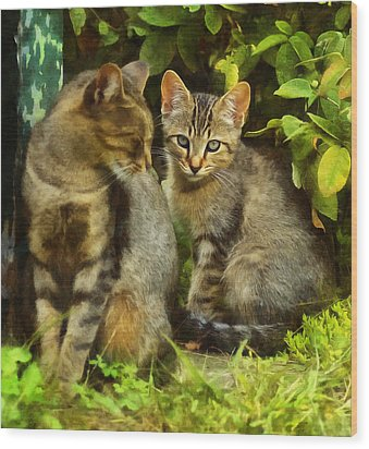 A Pair Of Feral Cats Wood Print