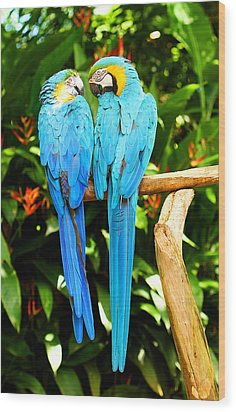 A Pair Of Parrots Wood Print by Marilyn Hunt