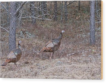 Wood Print featuring the photograph A Pair Of Turkeys 1152 by Michael Peychich