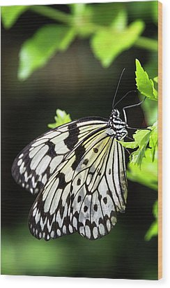 Wood Print featuring the photograph A Paper Kite Butterfly On A Leaf  by Saija Lehtonen