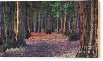 A Path Of Redwoods Wood Print