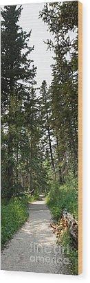 A Path Through The Trees Wood Print