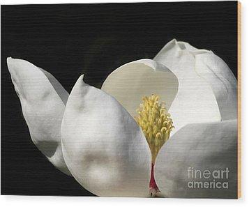 A Peek Inside A Magnolia Wood Print by Sabrina L Ryan
