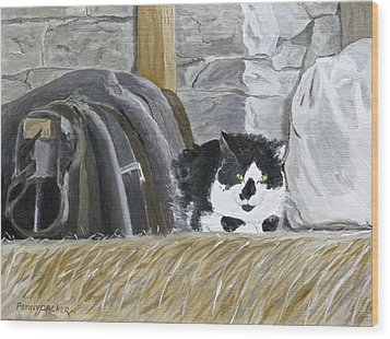 A Penns Valley Barn Kitty Wood Print