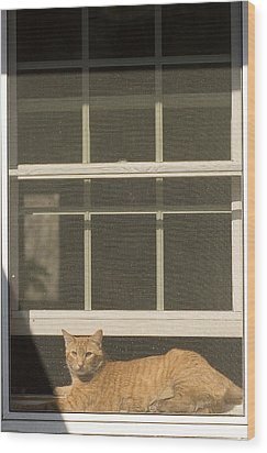 A Pet Cat Resting In A Screened Window Wood Print by Charles Kogod