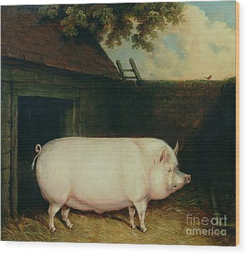 A Pig In Its Sty Wood Print by E M Fox