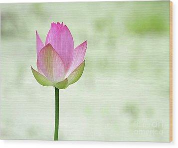 A Pink Lotus Wood Print by Sabrina L Ryan
