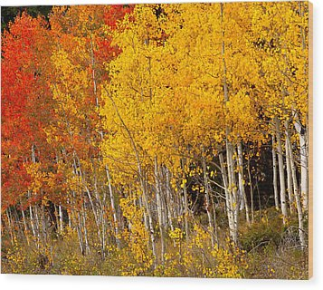 A Place In The Aspen Forest Wood Print by Tim Reaves
