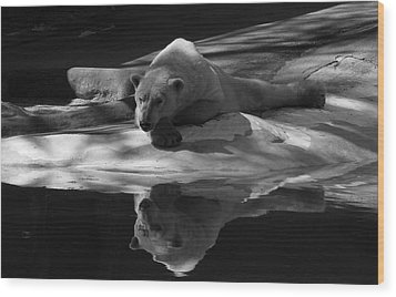 A Polar Bear Reflects Wood Print by Karol Livote