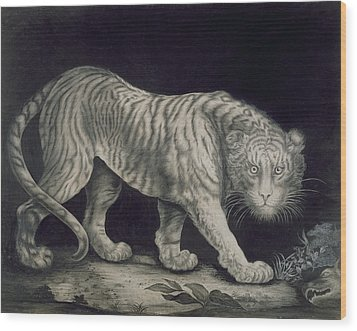A Prowling Tiger Wood Print by Elizabeth Pringle