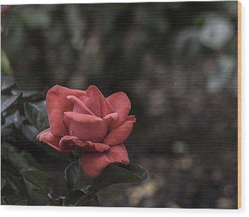 A Red Beauty Wood Print