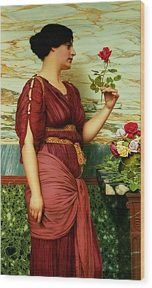 A Red Rose   Wood Print by John William Godward
