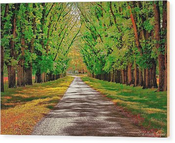 A Road Through Autumn Wood Print by Wallaroo Images