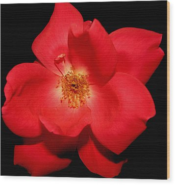 A Rose By Any Other Name Wood Print by Dottie Dees