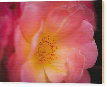 A Rose By Any Other Name Wood Print